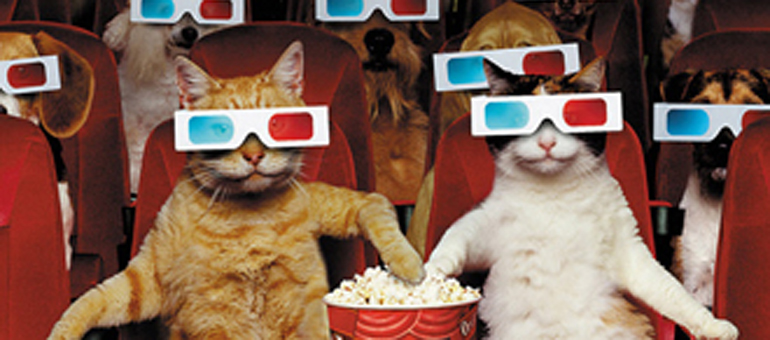 3D-Cat-movie-theater